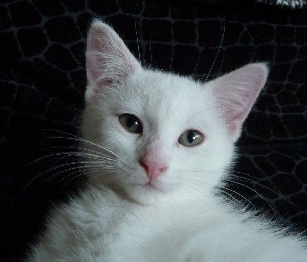 Cette belle chatte rose vous rendra dingues! sur MrSexe