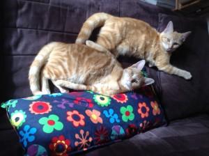 Abricot et Goyave