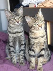 Julia(2) et Tibou