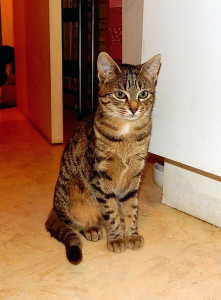 Athena(2)