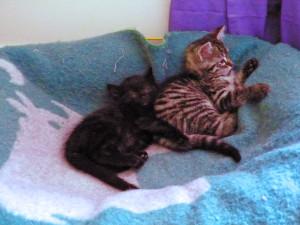 Mika et Madi