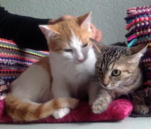 Miso et Misty
