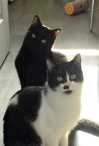 Juka et Macha