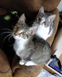 Arya et Hokshi