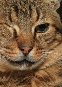 Poupoune, dit le Lynx