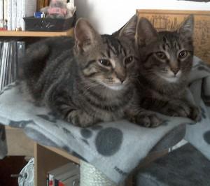 Poppy et Pipo