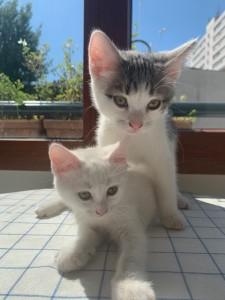 Marie et Tanguy